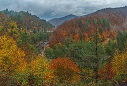 Bulgaria Autumn Forest Copyright Tzvetan Zlatanov